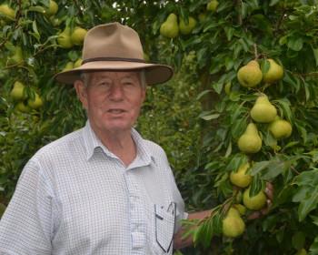 In Season: Good Boy Pears